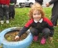 Planting Daffodils!