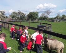 Senior Infants School Tour- Caragh Pet Farm